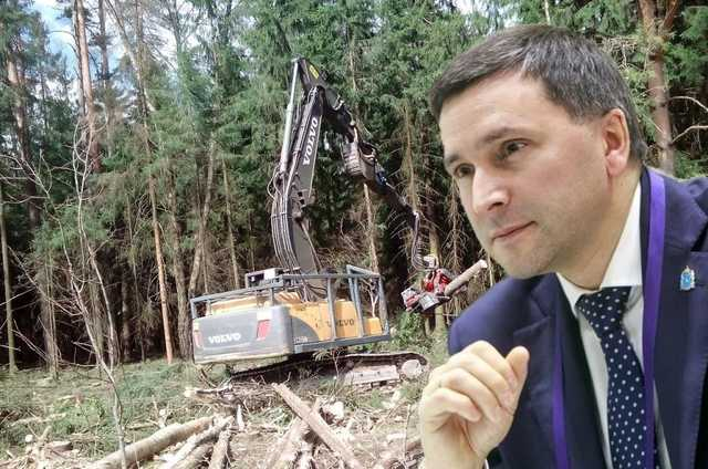 Коттеджи вместо леса — тайная инициатива министра Кобылкина