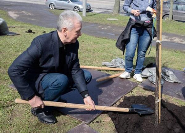 Собянин озеленит Москву согласно правленой озеленителем госзакупке