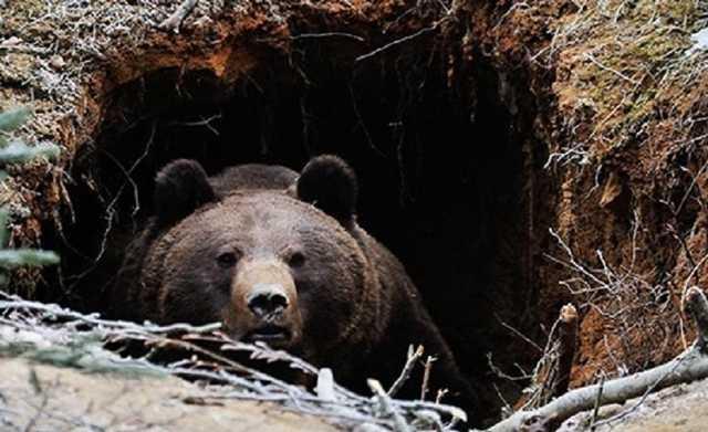 Экс-депутат госсобрания Якутии погиб на охоте. Он не пережил схватки с медведем