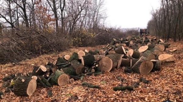 В Харьковской области задержали группу лиц во время масштабной вырубки леса