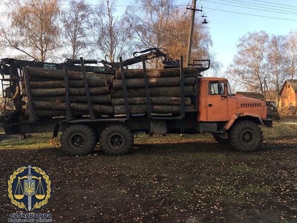Под Харьковом лесники незаконно спилили 18 тысяч деревьев на 100 миллионов гривен - прокуратура