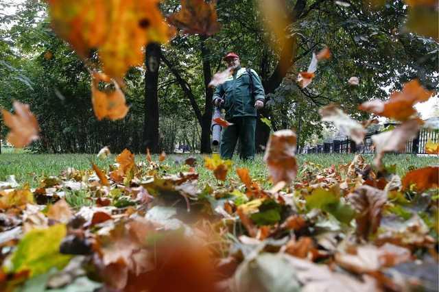 Осенью Москва потратила 850 миллионов рублей на вывоз опавших листьев с газонов — хотя официально их собирать нельзя. Расследование Ивана Голунова