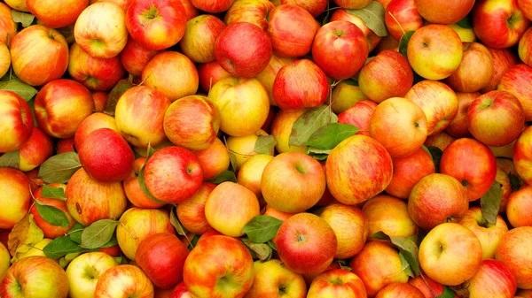 В США начали продавать яблоки, которые могут храниться целый год