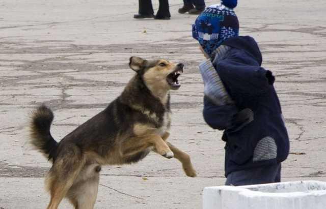 Стая собак попыталась разорвать российскую школьницу