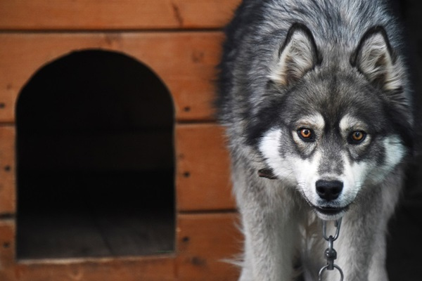Россиянин спрятал деньги в собачьей конуре и лишился миллиона рублей